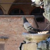Bologna 2009