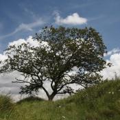 Un albero, le stagioni