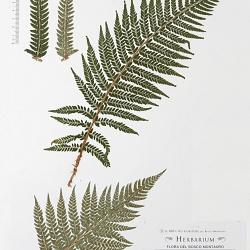 Herbarium