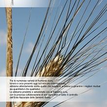 Catalogo Fedelseme 2008