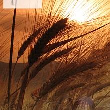 Catalogo Fedelseme 2007