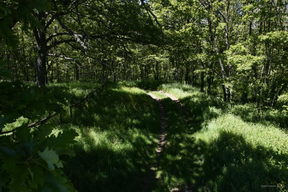 Un viottolo - Un viottolo attraversa il bosco. Territorio sito nel Comune di San Bartolomeo in Galdo BN Italy.