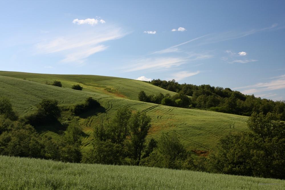 Monte Taglianaso - Da Monte Taglianaso, sguardo verso il Bosco Montauro, in direzione NO. Territorio sito nel Comune di San Bartolomeo in Galdo BN Italy.
