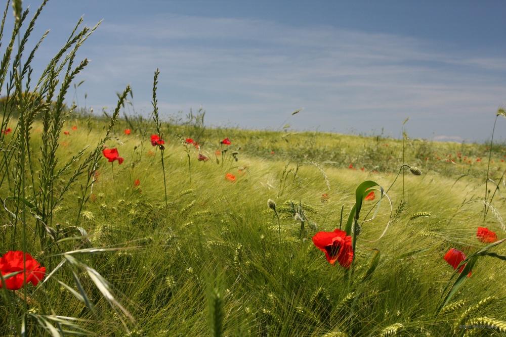 C.da Cappelle. Territorio sito nel Comune di San Bartolomeo in Galdo BN Italy.