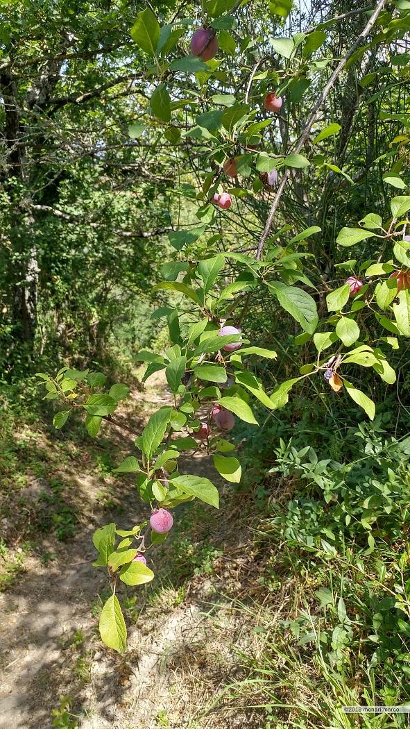 Varietà di frutti dagli orti relitti.