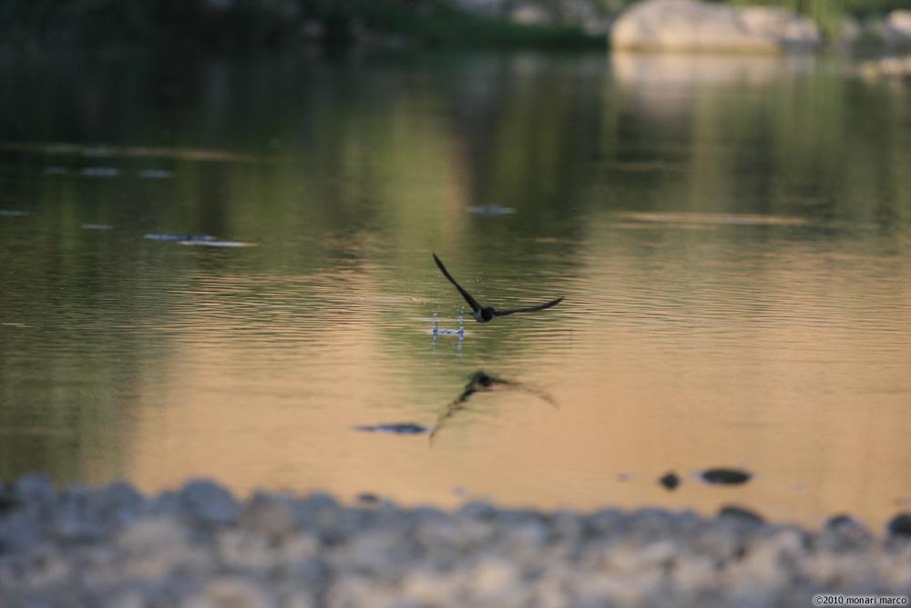Un sorso d' acqua