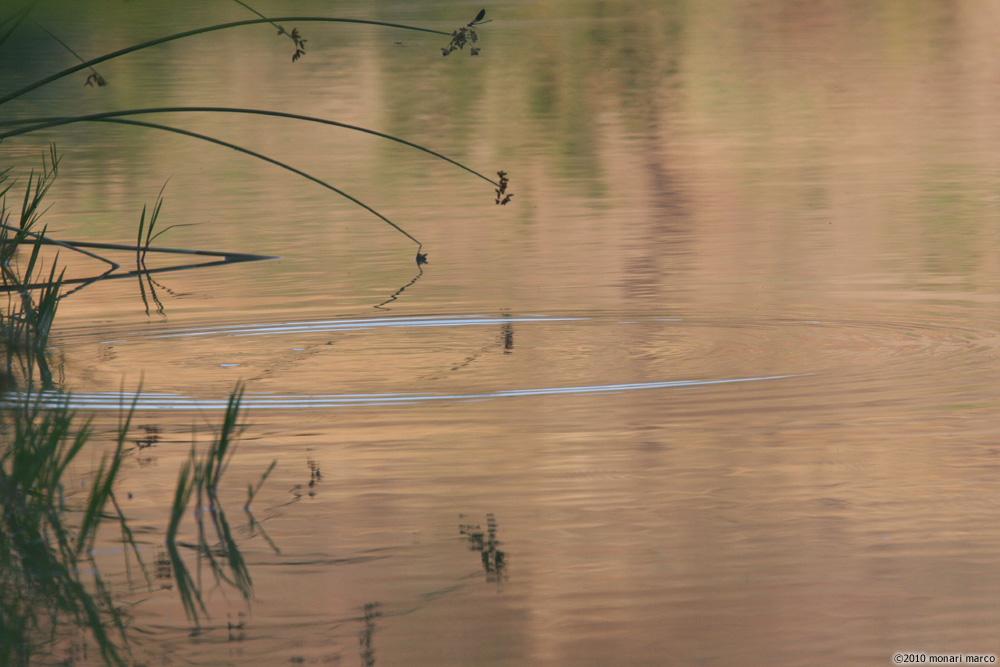 I cerchi nell' acqua