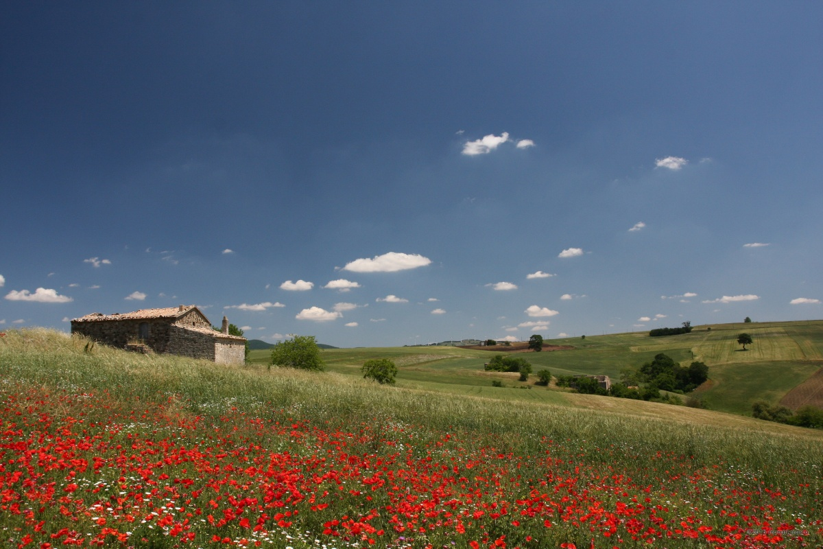 Ormai Estate - C.da Signora, sguardo verso NNE. Territorio sito nel Comune di Volturara Appula FG Italy.