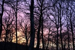 Tutti i colori del tramonto - Tramonto tra le querce del Bosco Montauro. Territorio sito nel Comune di San Bartolomeo in Galdo BN Italy.