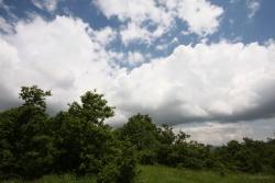 Ingresso al bosco Montauro. Vallone Muccillo. Territorio sito nel Comune di San Bartolomeo in Galdo BN Italy.