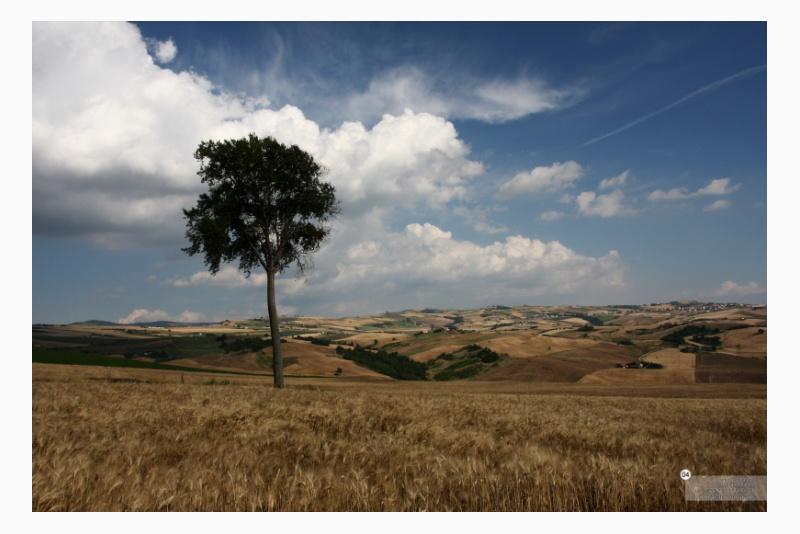 C.da Fontanelle - Populus nigra x canadensis Moench ~ pioppo ibrido euro-americano. Territorio sito nel Comune di San Bartolomeo in Galdo BN Italy. 04
