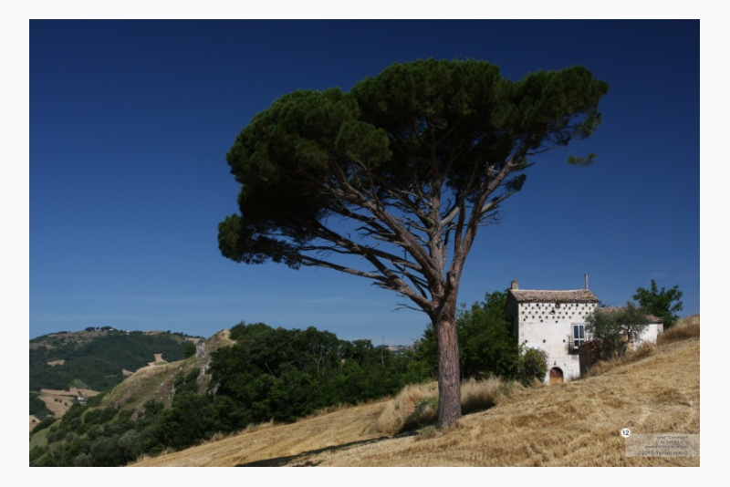 C.da Santa Lucia - Pinus pinea L. ~ pino domestico. In prossimità un casino di campagna datato 1827, sullo sfondo il Toppo di Madonna della Neve. Territorio sito nel Comune di San Bartolomeo in Galdo BN Italy. 12